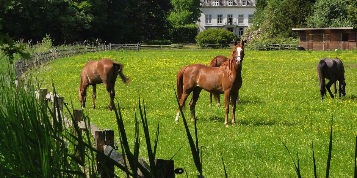 paardenafsluiting