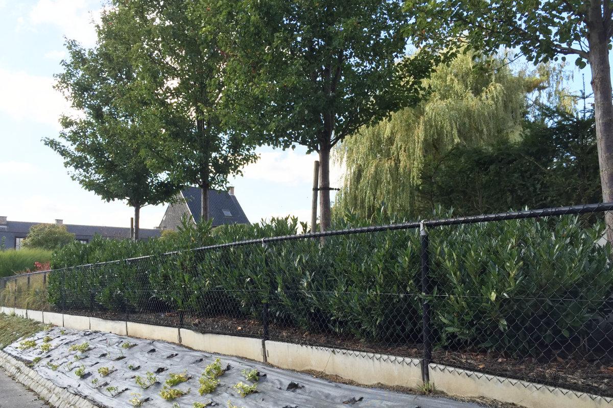 Houten Scheidingswand Tuin : Veelgeplaatste tuinafsluitingen en hun prijzen