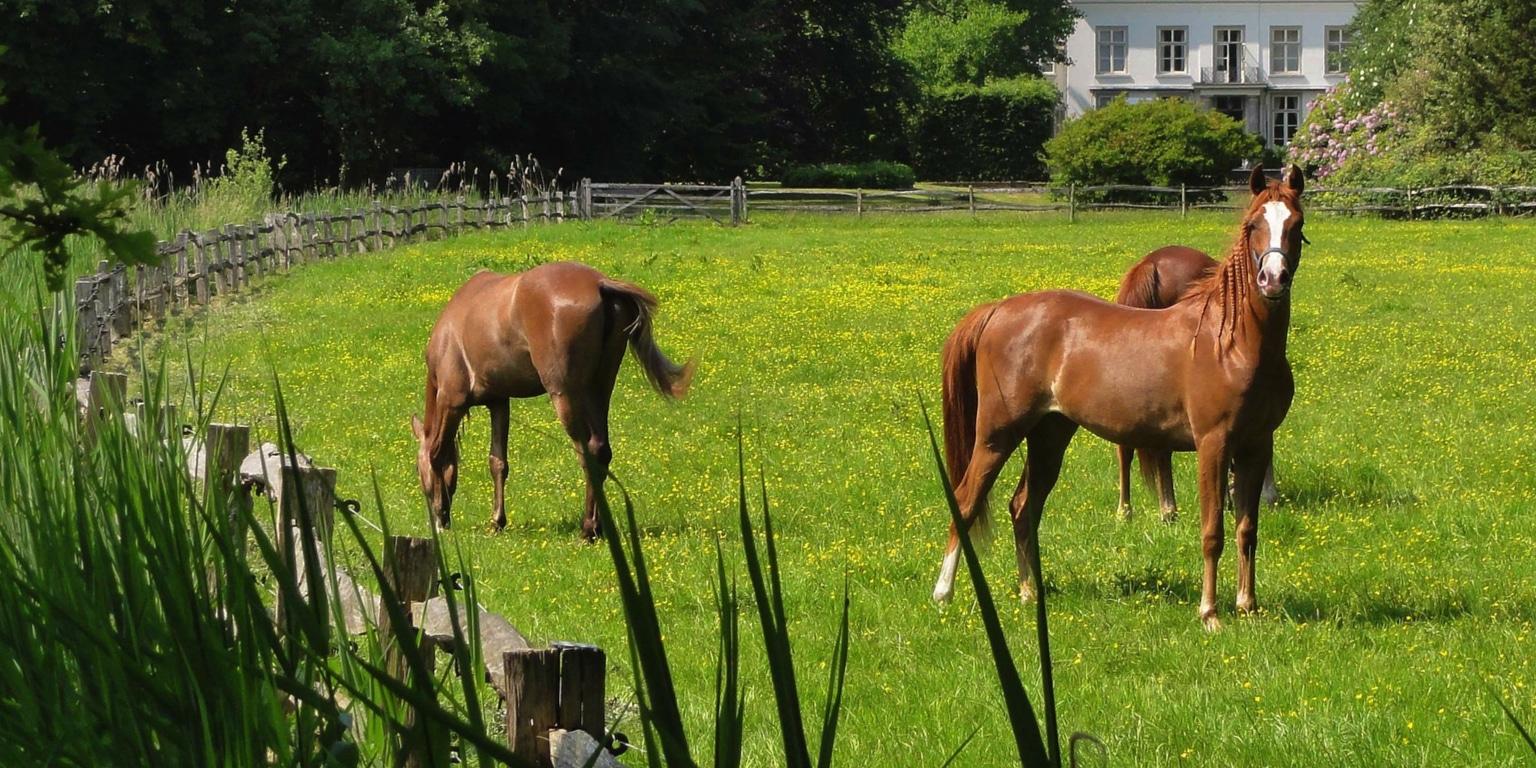 weideafsluiting paarden